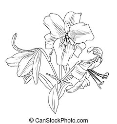 Blooming lily flowers bouquet isolated black white