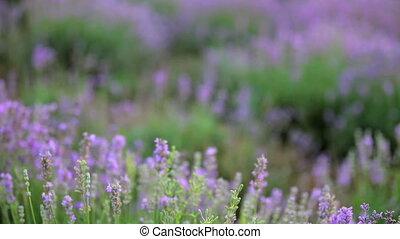 Blooming lowande