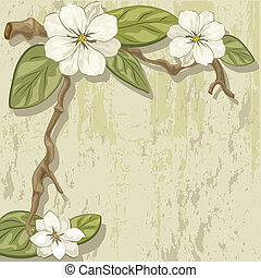 magnolia - blooming magnolia branch on a stone slab