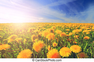 Blooming meadow in the morning