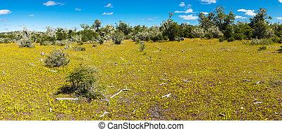 Blooming meadow of Tierra del Fuego in Argentina - Meadow ...