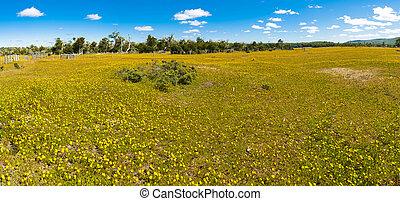 Blooming meadow of Tierra del Fuego - Meadow full of ...