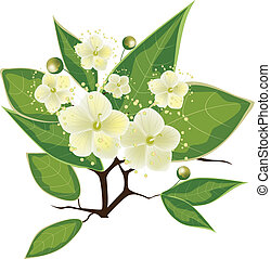 blooming myrtle branch, vector illustration