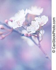 Blooming of Japanese sakura garden, abstract floral...