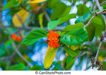 Blooming orange flowers on green tree leaves