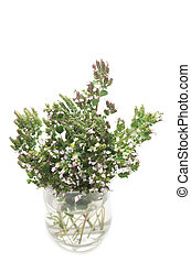 Blooming oregano in cristal vase against white background