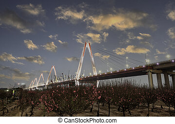Blooming peach flowers with Nhat Tan bridge on background during Tet holiday in Hanoi