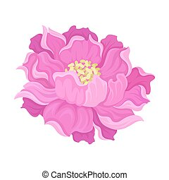 Blooming pink flower. Vector illustration on a white background.