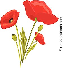 Blooming red poppy