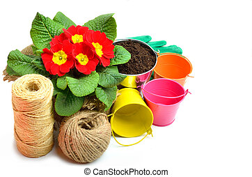red primulas in flower bed with pots, thread isolated on white