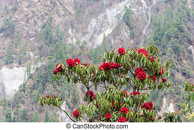 Blooming rhododendron on the background of mountains.