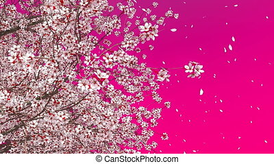 Blooming sakura cherry crown on pink background - Close up...