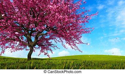 Blooming sakura cherry tree on green grass hills - Lush...