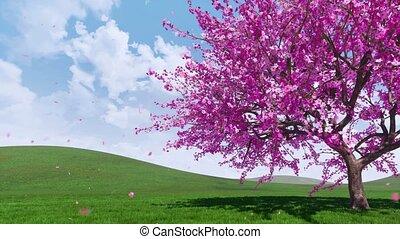 Blooming sakura cherry tree with falling petals 4K - Lush...