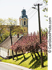 Blooming sakura trees and old church, seasonal scene