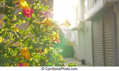 Blooming shrub in the light of bright sun - Slow motion shot...