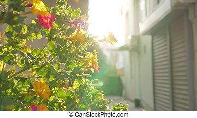 Blooming shrub in the light of bright sun