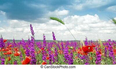 Blooming Spring Field