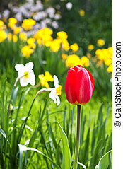 Blooming spring flowers - Field of blooming flowers in...