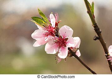 blooming spring tree flower