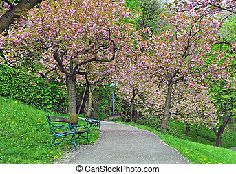 Blooming spring trees in the park