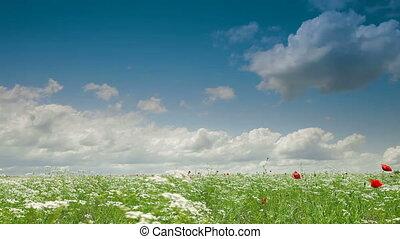 Blooming Summer Landscape
