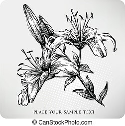 Blooming Tiger Lily Hand draw