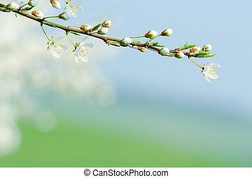 Blooming tree branch with blurred background