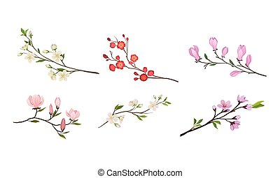 Blooming Tree Branches and Twigs with Tender Flower Buds Vector Set