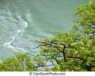 Blooming tree branches over river.