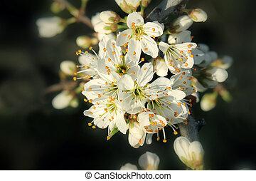 blooming tree flowers