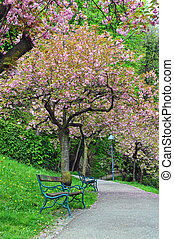 Blooming tree in the city park