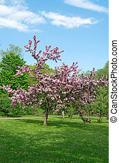 Blooming tree on a green lawn