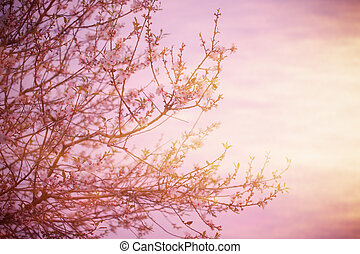 Blooming tree over sunset