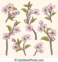 Blooming tree. Set collection. Hand drawn botanical pink blossom branches on beige background. Vector illustration