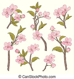 Blooming tree. Set collection. Hand drawn botanical pink blossom branches on white background. Vector illustration