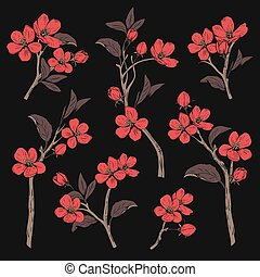 Blooming tree. Set collection. Hand drawn botanical red blossom branches on black background. Vector illustration