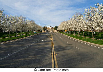 Blooming trees along the street