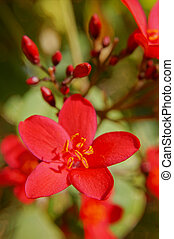 Blooming tropical tree with bright red flowers