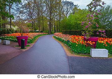 Blooming various colorful spring flowers in the Keukenhof park, Netherlands