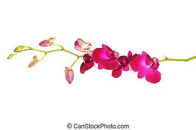 violet orchids flower