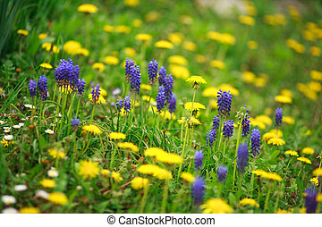 Blooming wild spring flowers in meadow, background of beauty freshness and purity of nature