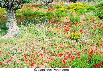 Blooming wildflowers under olive trees in Greece