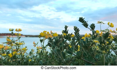 blooming yellow flowers on blue lake