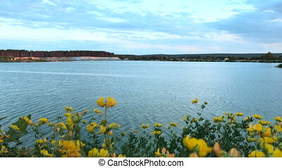 blooming yellow flowers on the background of the Blue Lake