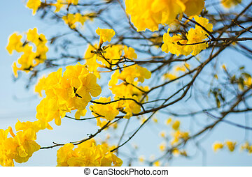 blooming yellow flowers with blue sky on blurred background