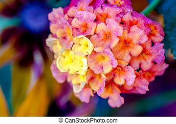 Blooming Zinnia and Lantana Flowers