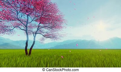 Bloomy sakura cherry tree slow-motion - Spring scenery with...