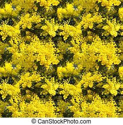 blosom, plano de fondo, flores del resorte, seamless, mimosa