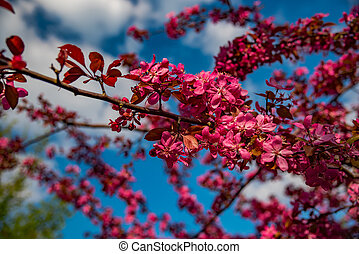 blossom branch red flowers